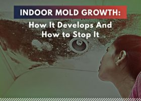 Indoor Mold Growth: How It Develops and How to Stop It