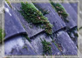 Telltale Signs That You Need to Replace Your Roof Soon
